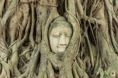 Huvud i trädet av osedda Thailand Royaltyfria Foton