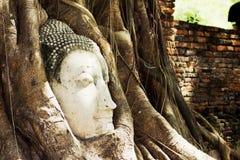 Huvudet av Buddha Fotografering för Bildbyråer