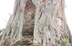Huvudet av Buddha i Wat Na Pra Meru. Royaltyfria Foton