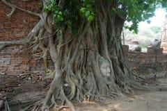 Huvudet av Buddhastatyn i trädet rotar Arkivbild
