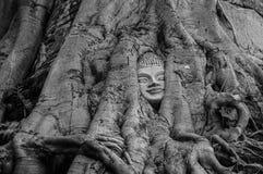 Huvudet av Buddhastatyn i trädet rotar på Wat Na Phra Meru Royaltyfri Fotografi