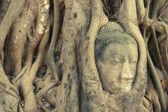 Huvudet av Buddhastatyn som förbi flätas ihop, rotar Arkivbild