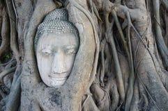 Huvudet av den buddha statyn i rotar av träd på Ayutthaya, Thailand Royaltyfri Fotografi