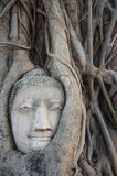 Huvudet av den buddha statyn i rotar av träd på Ayutthaya, Thailand Fotografering för Bildbyråer