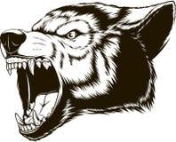 Huvudet av den vilda vargen royaltyfri illustrationer
