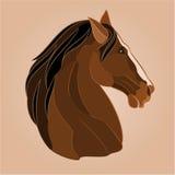 Huvudet av en brun hästhingst Royaltyfri Bild