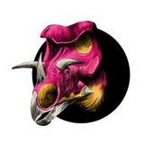 Huvudet av en dinosaurieavel av triceratopsen Royaltyfri Foto