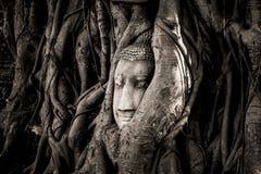Huvudet av en sandstenBuddhastaty som kura ihop sig i trädet, rotar bredvid de mindre kapellen av Wat Maha That, Phra Nakhon si A Royaltyfri Foto