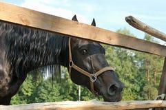 Huvudet av en svart häst bak ett trästaket Fotografering för Bildbyråer