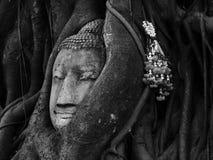 Huvudet av sandstenBuddha som är bevuxet vid Banyanträdet, historiska Ayutthaya, parkerar, Thailand Arkivfoto
