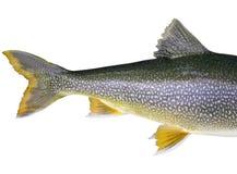 Huvudlös fisk royaltyfri foto