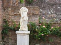 Huvudlös statyVestaloskuld mot den Rose Vines och tegelstenväggen Fotografering för Bildbyråer