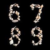Huvudnummer för olika havsskal 6 7 8 9 på isolerad svartbac Royaltyfri Fotografi
