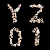Huvudnummer Y Z 0 1 för olika havsskal på isolerad svartbac Royaltyfri Bild