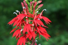 Huvudsaklig blomma Arkivfoto