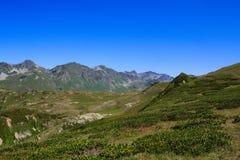 Huvudsaklig Caucasian Ridge och alpina ängar för grönt gräs med rhododendron Arkivfoton