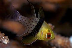 huvudsaklig fiskpajama Arkivfoton