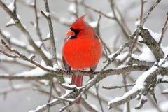 huvudsaklig snow royaltyfri bild