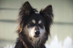 Huvudskott av en blandad avelhund Royaltyfri Bild