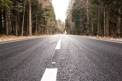 Huvudväg till och med höstskog arkivbild
