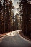 Huvudvägen mellan sörjer trädskogen arkivbilder