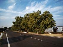 Huvudvägvägtemplet fördunklar neemträdet Royaltyfri Foto