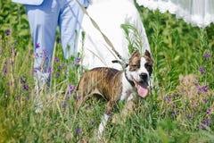 Huwelijk met hond de zomer openlucht Stock Afbeelding