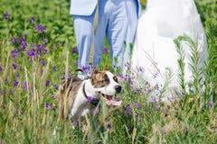 Huwelijk met hond de zomer openlucht Royalty-vrije Stock Afbeeldingen