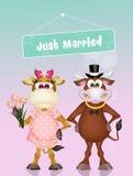 Huwelijk van koeien stock illustratie
