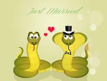 Huwelijk van slangen Stock Foto