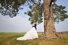 Huwelijksfoto het schieten Bruidegom en bruid die onder pijnboomboom omhelzen stock foto's