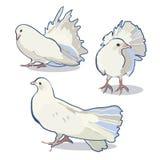Huwelijksillustratie met duif royalty-vrije illustratie