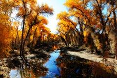 HuYang Tree08 Photos libres de droits