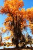 HuYang Tree12 Images libres de droits
