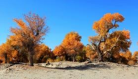 HuYang Tree14 Image stock