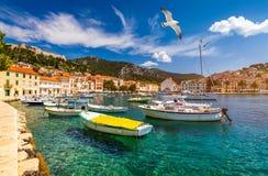 Hvar miasteczko z seagull lataniem nad miastem, sławny luksusowy podróży miejsce przeznaczenia w Chorwacja Łodzie na Hvar wyspie, obrazy royalty free