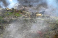 Hveragerdi valley of hot waters in iceland Royalty Free Stock Photos