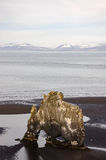 Hvitserkur, zwart zand, basaltstapel, IJsland Royalty-vrije Stock Fotografie