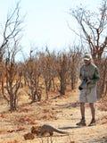 A safari guide spots a critically endangered pangolin while on a walking safari. Hwange National Park, Zimbabwe 2018. A safari guide from Camp Hwange stands stock photos