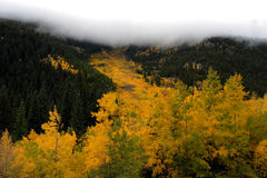 Hwy 40 valley in fall 3. Fall colors in avalanche chute on berthoud pass Colorado Stock Photo
