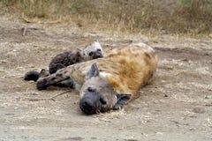 Hyänenmutter und -junges Lizenzfreie Stockbilder
