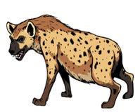 Hyène. illustration stock