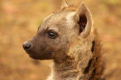Hyène repérée par jeunes  Image libre de droits