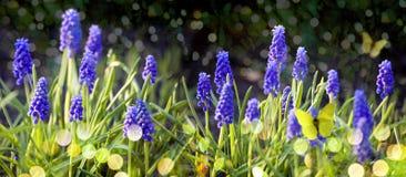 Hyacint royalty-vrije stock foto