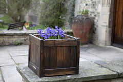 hyacint Стоковые Изображения RF
