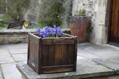 Hyacint Imagens de Stock Royalty Free