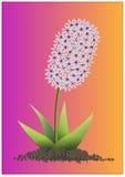 Hyacint  Lizenzfreies Stockbild