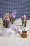 Hyacint stock foto