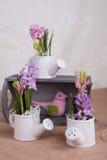Hyacint stock foto's