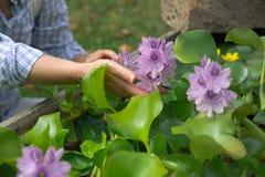 Hyacint-blomma Royaltyfri Foto
